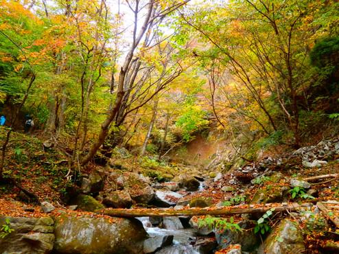 森林セラピー西沢2.JPG