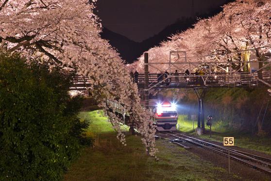 「夜桜咲くホームへ」岡本芳隆.jpg