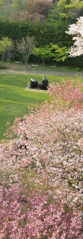 春桜2.JPG