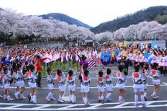 14推薦 桜祭りは最高潮.JPG