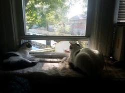Cuddles & Kitty - Mrs. Chetram