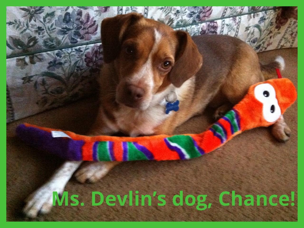 Ms.  Devlin