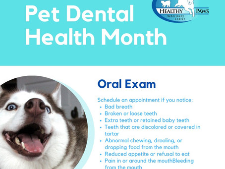 Pet Dental Health 2020