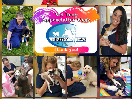 Happy National Veterinary Technician Week!