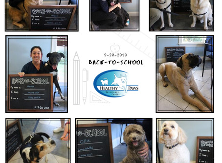 Back-to-School Pet Picture Day!