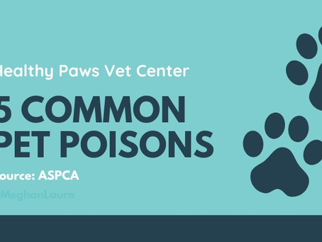 Pet Poison Prevention Month 2021