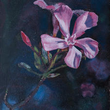 Flower of the Pinkish Lights