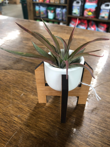 Mini Air Plant Holder