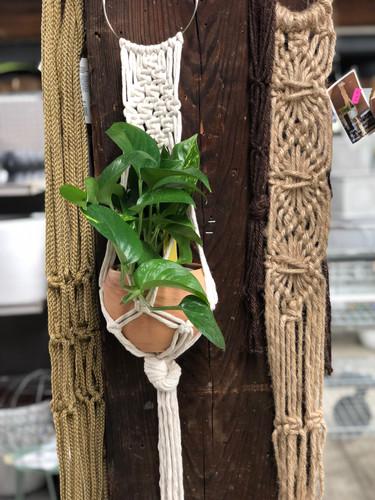 #1 terracotta pot in locally made macrame hanger