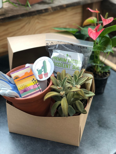 """""""The Houseplants Hoarder - Succulent"""" Gift Box"""