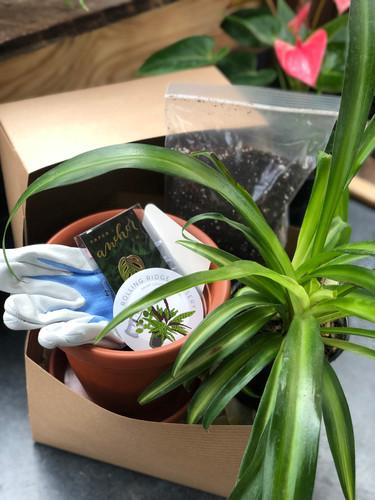 """The Houseplant Hoarder - Foliage"" Gift Box"