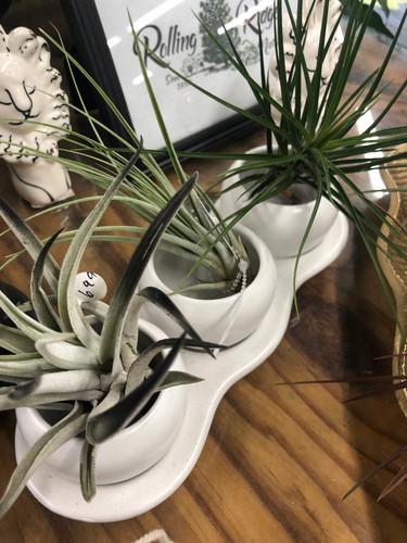 Tri-planter White
