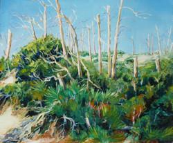 Carrabelle Badlands