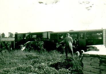 Wm Herring at Scalford Station 1.jpg