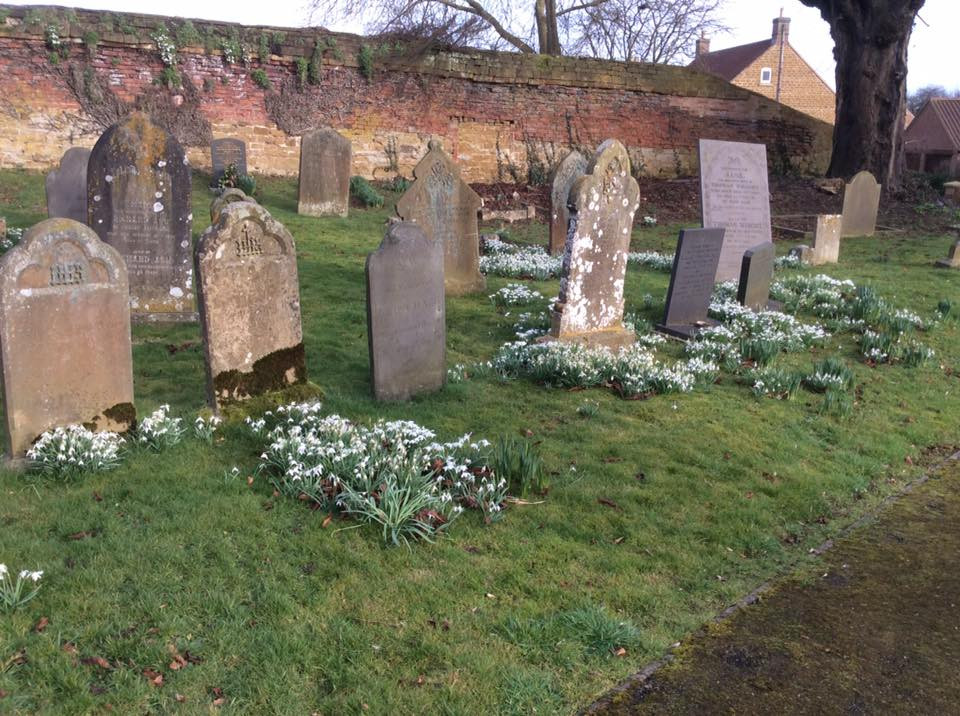 Snowdrops in the churchyard c. 2010