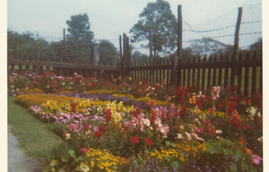 Field Cottage front garden c. 1960s