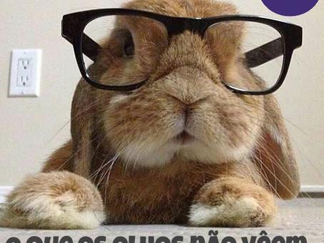 Nesta Páscoa, não dê coelho de presente