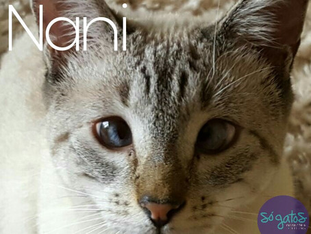 O estrabismo em gatos