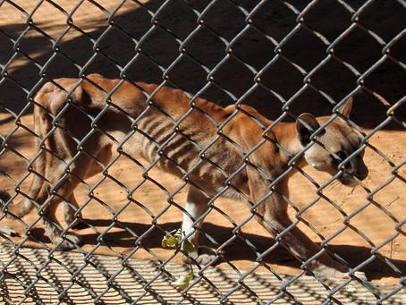 Animais morrem de fome em zoo da Venezuela.