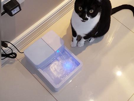 10 dicas fáceis para incentivar seu gato a beber mais água!