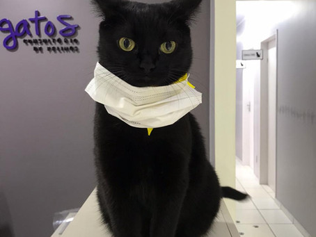 Gatos podem proteger contra a covid-19?