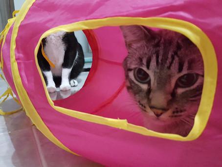 Um novo gato em casa, e agora?
