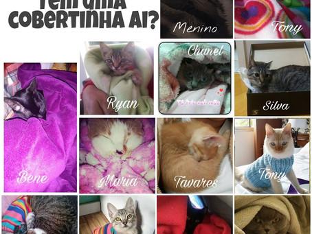 II Campanha: Aquecendo um gatinho carente neste inverno