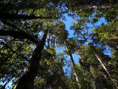 Climate Action + Forests = Sustainable Development