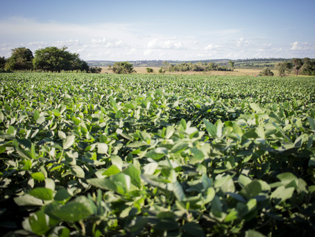 Paraguay demonstrates benefits of forests as a nature-based solution to climate change
