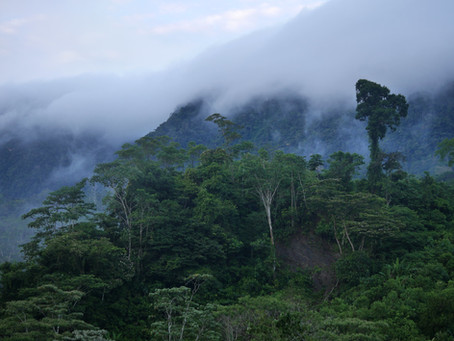 El acceso a la financiación fomenta la ganadería sostenible en Costa Rica