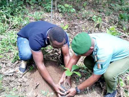 Laying the ground for landscape restoration in Côte d'Ivoire