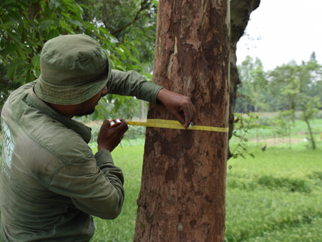 How a Robust National Forest Monitoring System Can Boost Transparency under the Paris Agreement