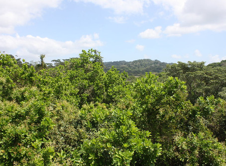 Building Consensus on Forest-Based Solutions