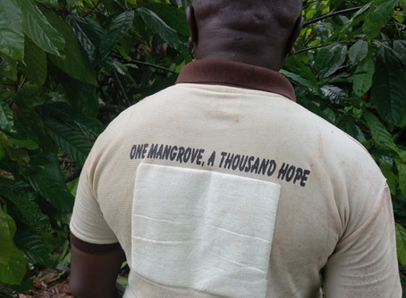 """One mangrove, a thousand hopes""- mangrove rehabilitation in Nigeria"