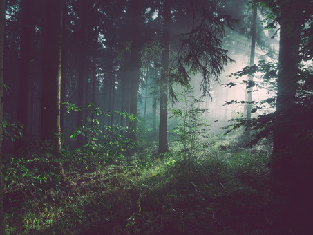 Forests as assets