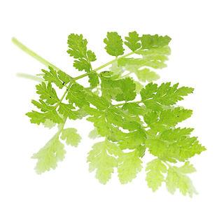 sweet-cicely-leaf.jpg