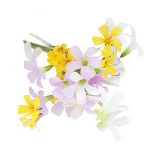 Butterfly-sorrel-flower.jpg