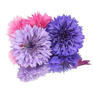 Cornflowers-flower.jpg