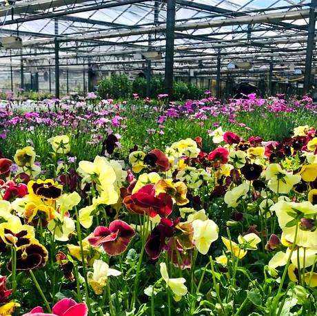 When in Norfolk.. drop in on your flower growers!