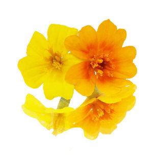 Tiny-Taget-flower.jpg