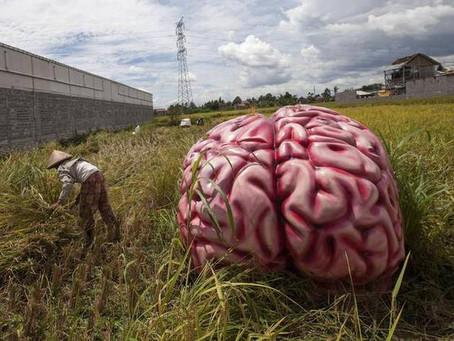 Neuroplasticity: Welcome to Brain Farming!