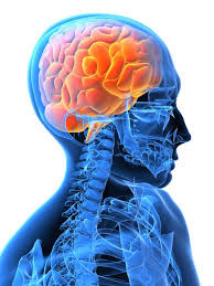 Neurological Physiotherapy: Bobath concept part 2