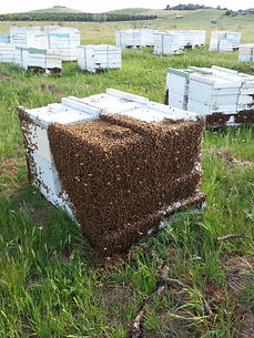 The best homes for our bees