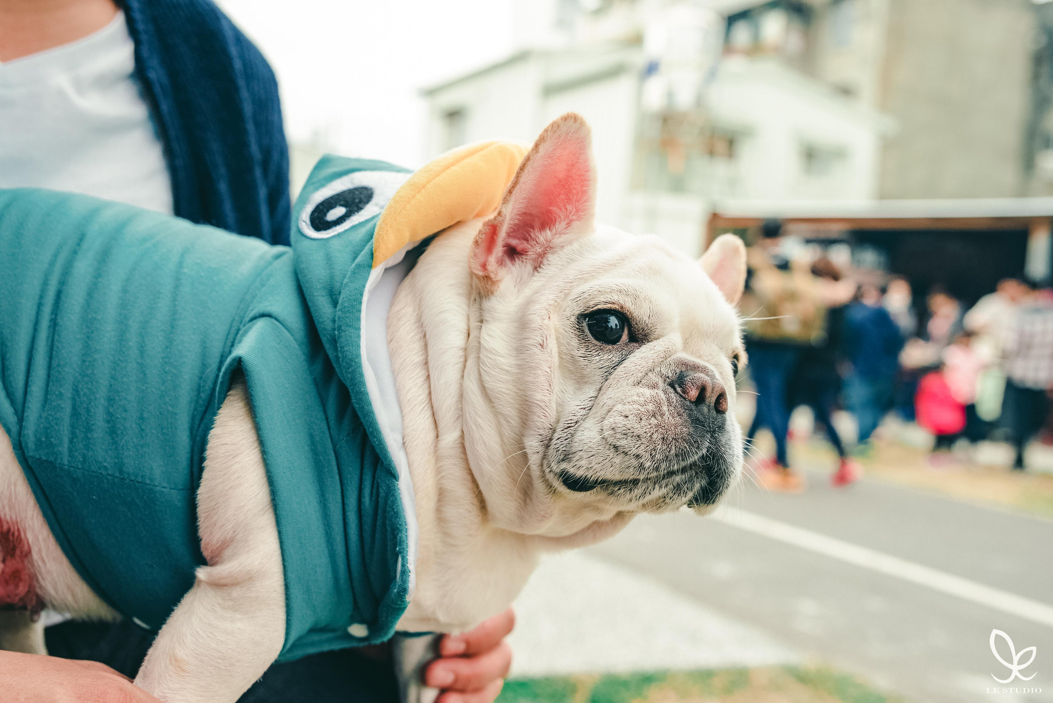寵物攝影,專業寵物寫真,里斯朵攝影工坊 LESTUDIO