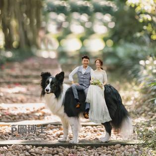 坐在愛犬身上去拍婚紗吧:網友Sinny的請求