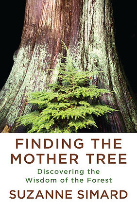 Finding The Mother Tree Hardcover