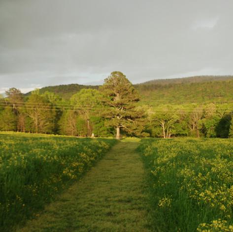 Field Apparitions
