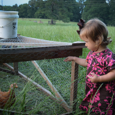 Old Century Meats Chicken Tractor and Kid