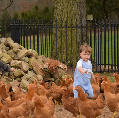 Old Century Meats Chickens and kid