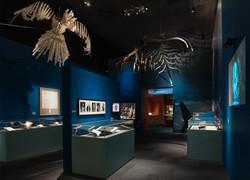 British Library Harpy Installation